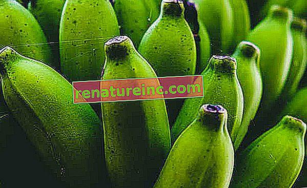 Cómo hacer biomasa de banano verde y cuáles son sus beneficios