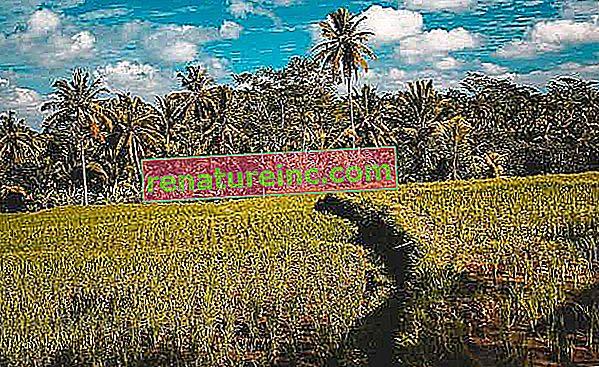 Какво е синтропното земеделие?