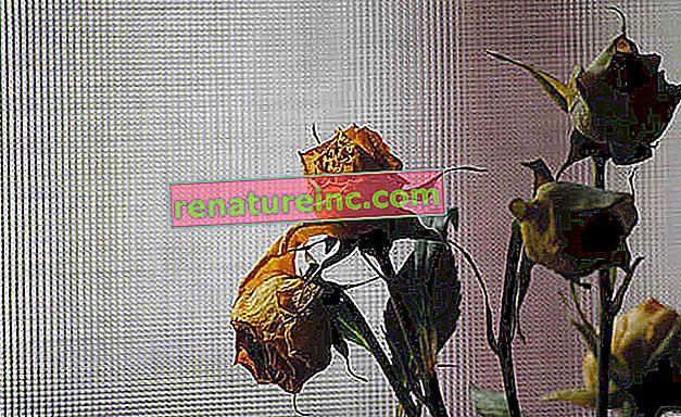 Sauver une plante mourante