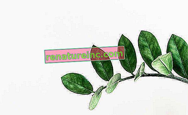 Conheça onze tipos de plantas de sombra