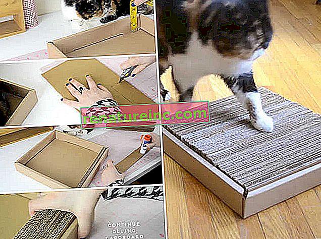 Gør det selv: papskrabeposter til katte