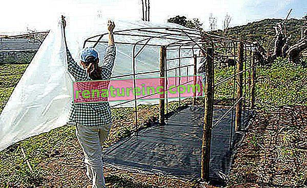 Kurz organickej záhrady č. 9: chráňte svoju plantáž pred nadmerným chladom a teplom a udržiavajte ju vyváženú