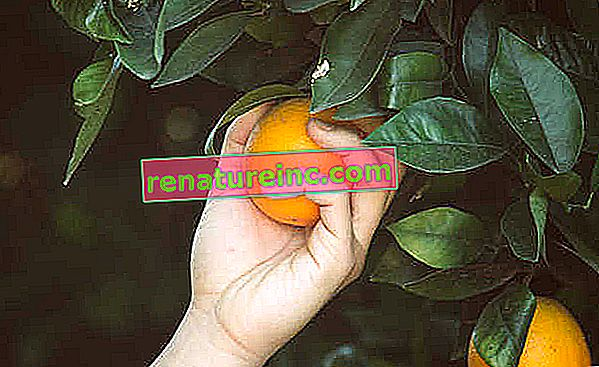 Beneficios del jugo entero de naranja y naranja