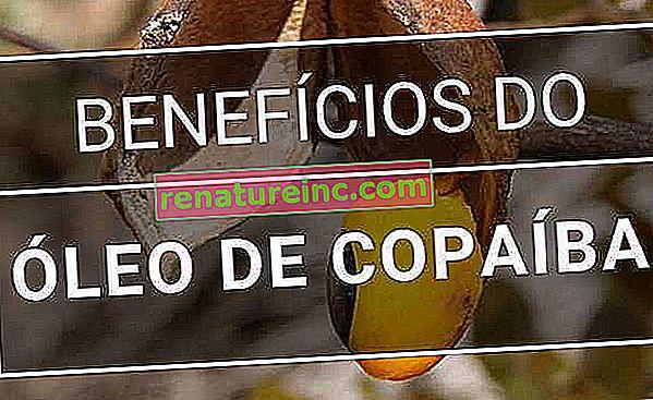 Huile de Copaiba: à quoi ça sert et avantages