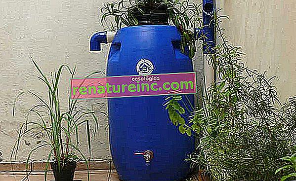 Mini-citerne: la réutilisation de l'eau à portée de main