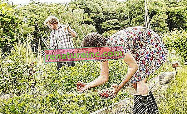 Aprenda a hacer insecticidas naturales y control de plagas en el jardín.