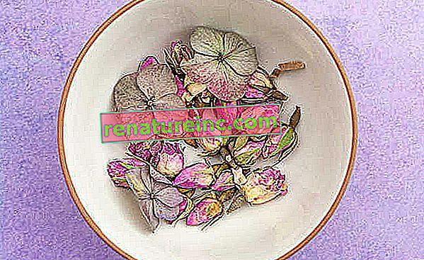Aceite de rosa mosqueta: ¿para que sirve?