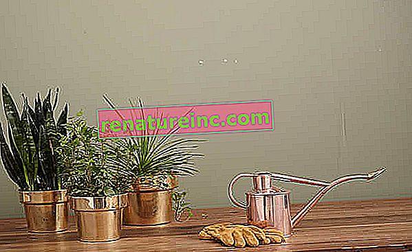 גלה צמחים המטהרים את האוויר