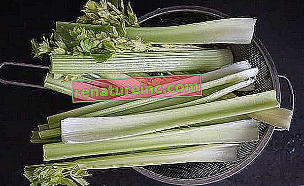 Celer: recepti od celera i zdravstvene dobrobiti