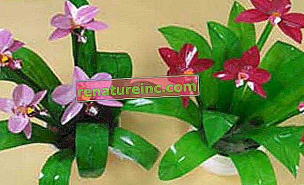 אומן יוצר צמחים ופרחים עם בקבוק PET