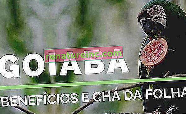 Beneficios del té de guayaba y hojas de guayaba
