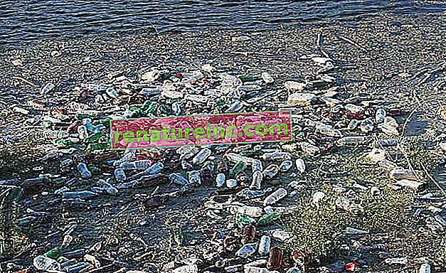 Устойчиви органични замърсители: опасността от УОЗ