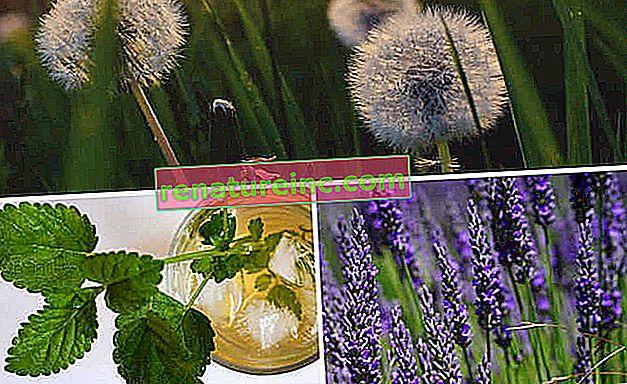 Trois plantes médicinales à cultiver dans la cour