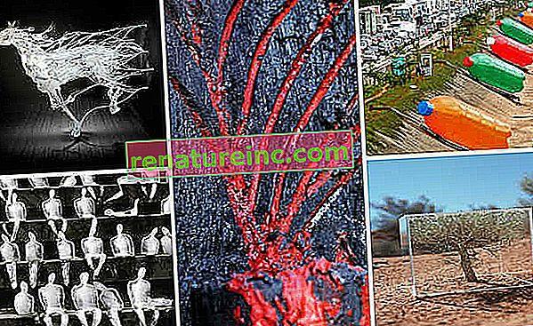Découvrez le travail de dix artistes visuels qui se consacrent à l'activisme environnemental dans leurs œuvres