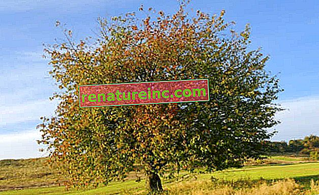 Realna vrednost dreves