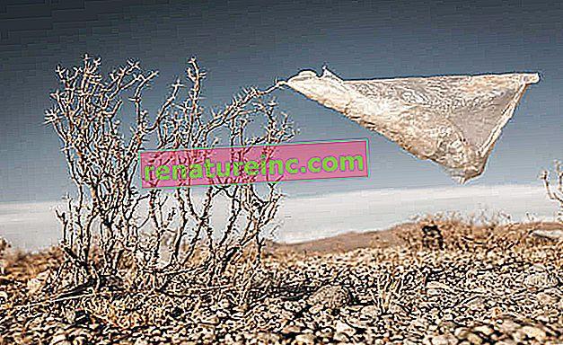 Fotografija narave je instrument za izobraževanje in boj proti okoljskim zločinom