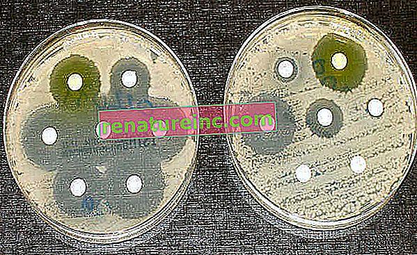 Triclocarbán: el uso indiscriminado solo trae daño