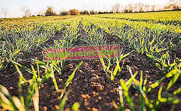 Entender que es la agricultura regenerativa