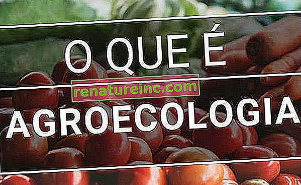 Hvad er agroøkologi