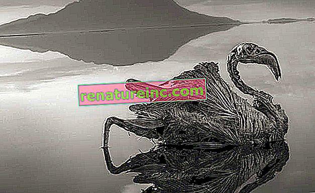 """Животните се превръщат в невероятни """"солени статуи"""" в езеро в Танзания"""