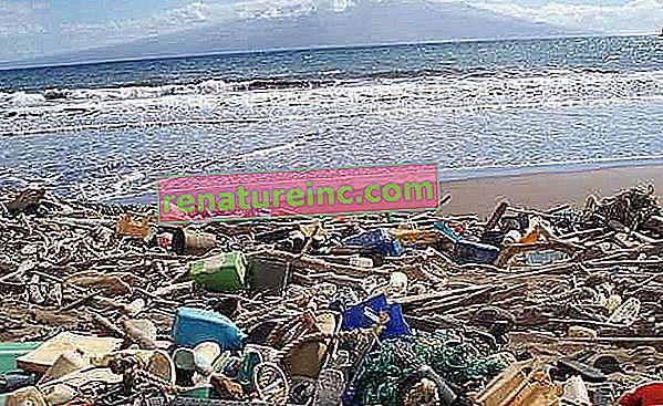 La concentración de plásticos en los océanos es alarmante, dicen expertos y activistas