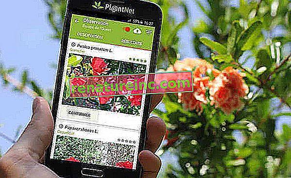 Pl @ ntNet er applikationen, der hjælper dig med at identificere plantearter med et simpelt mobiltelefonfoto