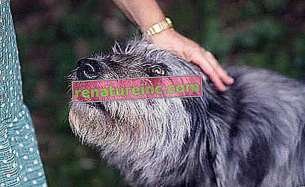 Comment composter les excréments de chien
