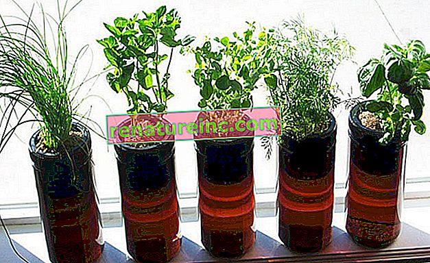 Le vase hydroponique en plastique recyclé assure un contrôle constant de l'eau