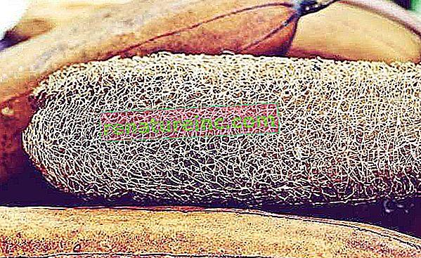 Lufa vegetal: cómo usar y sus diversos beneficios.