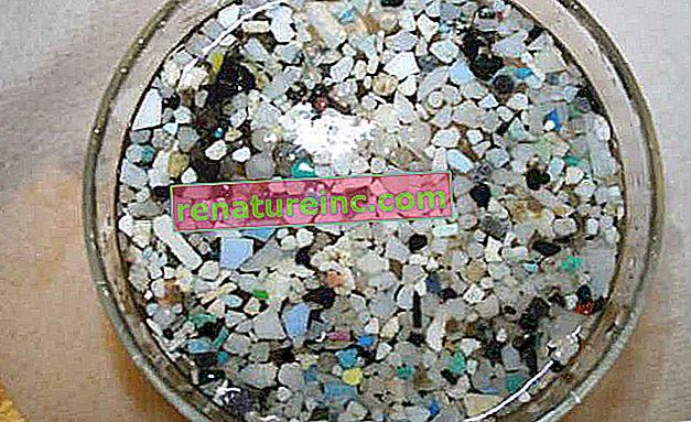 Mikroplastik: jeden z głównych zanieczyszczeń w oceanach