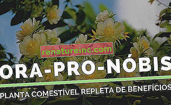 Ora-pro-nóbis: para que sirve, beneficios y recetas