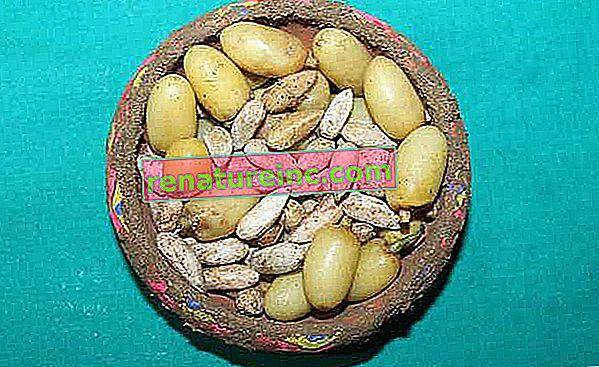 Aceite de neem: para que sirve y como usarlo