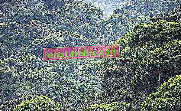 За 30 години Атлантическата гора регенерира размера на град Сао Пауло