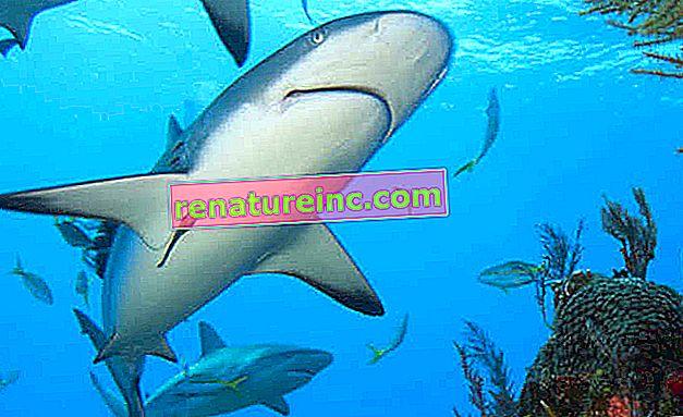 Nátery inšpirované žralocou pokožkou zvyšujú energetickú účinnosť pri preprave