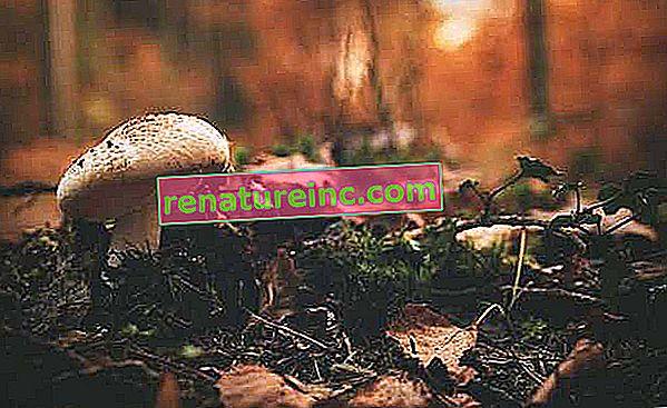 Humus: que es y cuales son sus funciones para el suelo