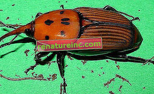 Запознайте се с насекомите, които ще ядете в бъдеще