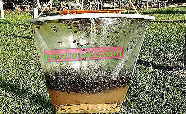 Pièges à mouches écologiques