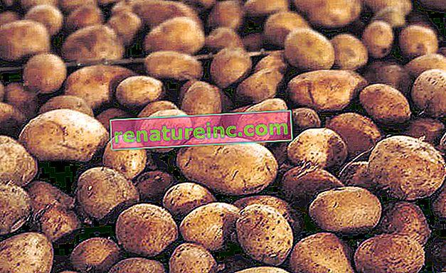 Poteter utenfor bordet: oppdag alternative bruksområder for poteter