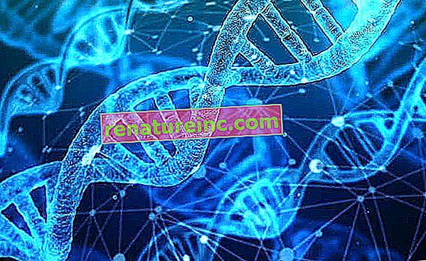 Bioetyka: czym jest i jakie ma znaczenie