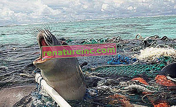 אוקיינוס פלסטיק: איך לברוח מהסבך הזה?