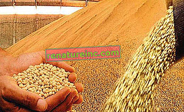 זרעים וחומרי הדברה מהונדסים גורמים למחלוקת בארצות הברית