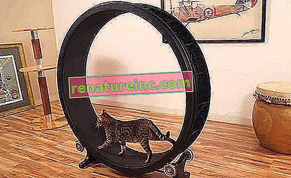 Træningshjul til katte får en mere praktisk version