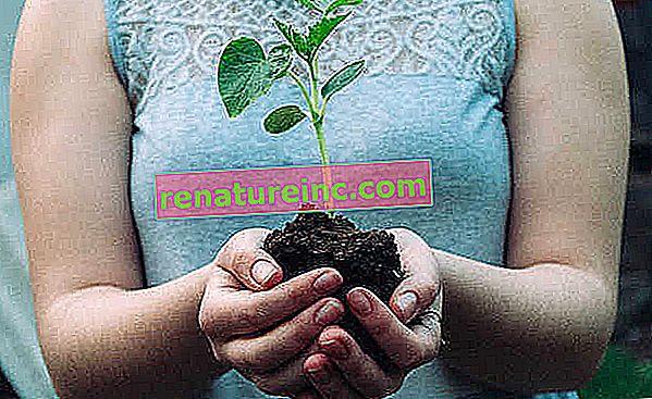 ¿Qué es la neutralización de carbono para las empresas?