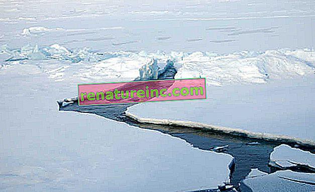 El Ártico es un nuevo objetivo para las empresas petroleras