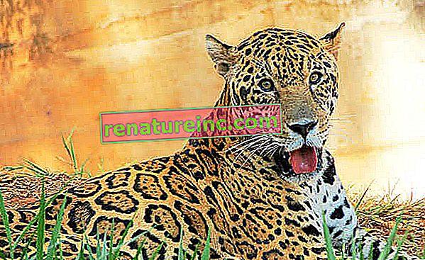 La campagne appelle à la fin de l'exposition d'animaux sauvages lors d'événements