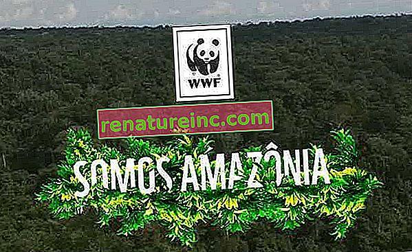 Únete a la campaña Somos Amazônia
