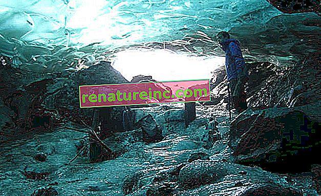 Гората е открита след повече от хиляда години замръзнала