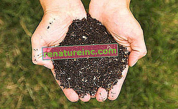 Cours de jardin biologique n ° 2: améliorer la qualité du sol avec des engrais maison