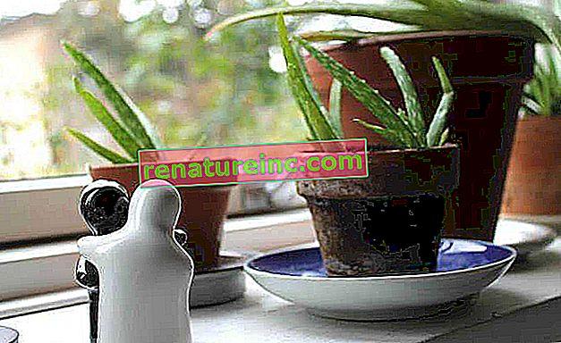 As melhores plantas para cada cômodo da casa