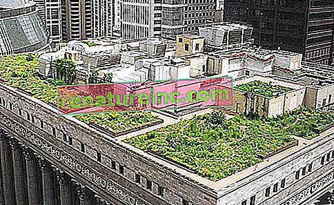 Изследванията се стремят да подобрят функционалността на зелените покриви